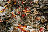 Góry jesienia - fotografia