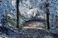 Pierwszy oddech zimy