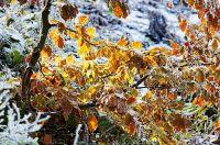 Zimowy pejzaż na fotografii